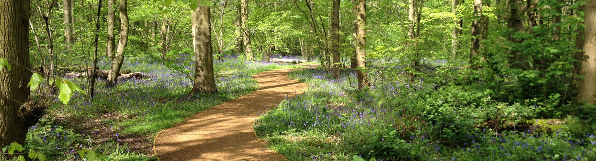 Bluebell footpath